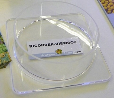 Ricordea-Viewbox